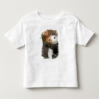 El frailecillo atlántico, un ave marina pelágica, camisetas