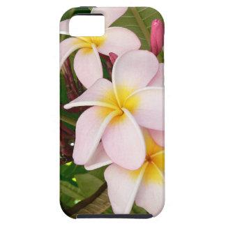 El Frangipani hawaiano de la hawaiana florece duch
