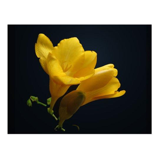 El Freesia amarillo florece postal