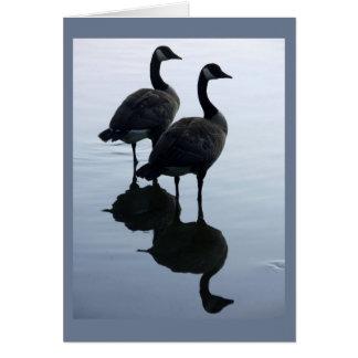 El ganso de Canadá carda tarjetas de felicitación