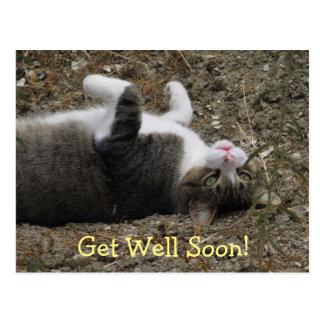 El gatito al revés consigue la postal bien