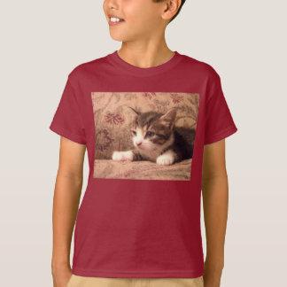 El gatito cardinal embroma la camisa