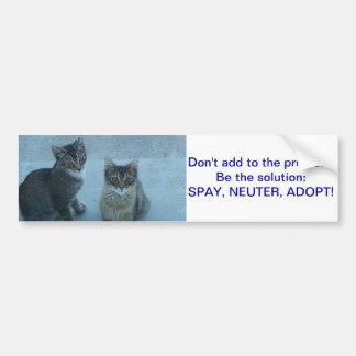 El gatito perdido adorable envía un mensaje pegatina para coche
