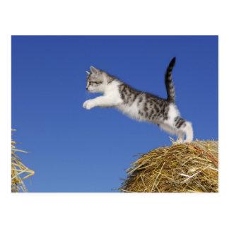 El gatito que salta 2 postal