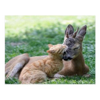el gato ama un ciervo postal