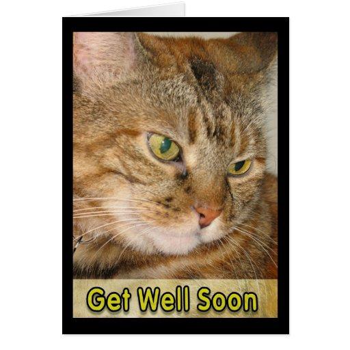 el gato consigue bien pronto felicitacion