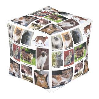 El gato cría diseño a todo color de la foto pouf