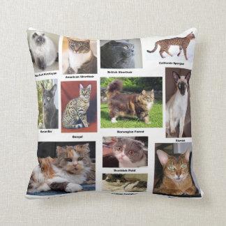El gato cría las almohadas a todo color de la foto