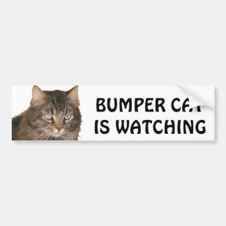 El gato de parachoques está mirando pegatina para coche