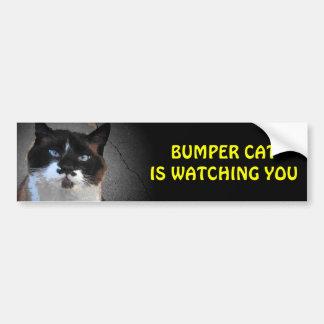El gato de parachoques original está mirando pegatina para coche