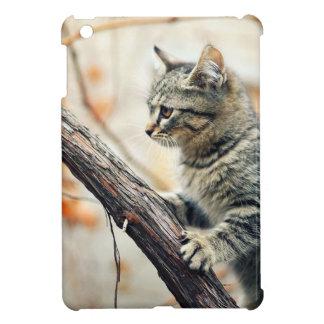 El gato de Tabby sube el árbol del otoño