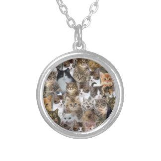 El gato del gatito hace frente al modelo collar plateado