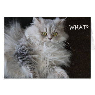 """El gato dice """"QUÉ?"""" - tarjeta de cumpleaños"""