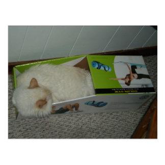 El gato duerme en caja de la Ejercicio-Estera Tarjeta Postal