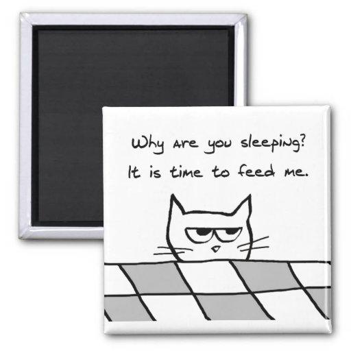 El gato enojado le quiere fuera de cama imán de frigorífico