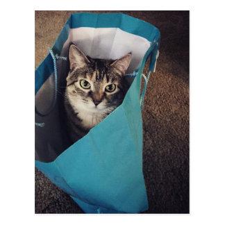 El gato está listo para salir del bolso postal