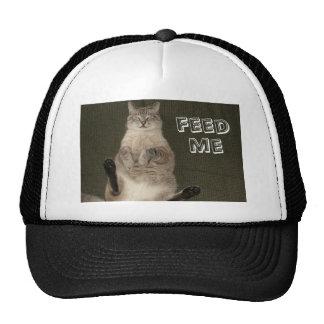 """El gato """"ME ALIMENTA"""" el gorra"""