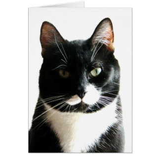 El gato mira fijamente abajo tarjeta de cumpleaños