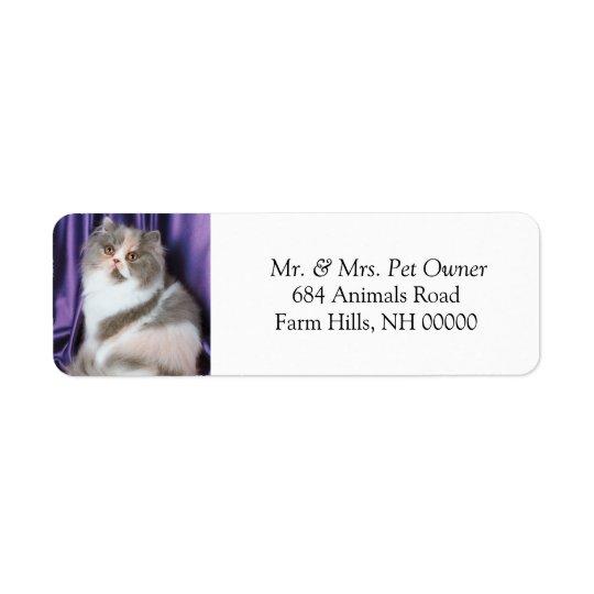 El gato que plantea el remite etiqueta a los etiqueta de remite