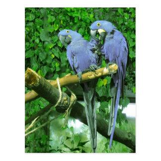 El gemelo azul repite mecánicamente la postal vert