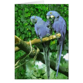 El gemelo azul repite mecánicamente la tarjeta ver