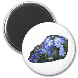 El grafito azul florece la foto de la cascada imanes de nevera