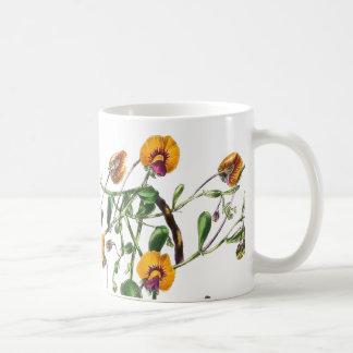 El guisante de olor botánico florece la taza