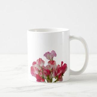 El guisante de olor florece la taza