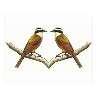 El hacer frente de dos pájaros: Kiskadees en lápiz Postal