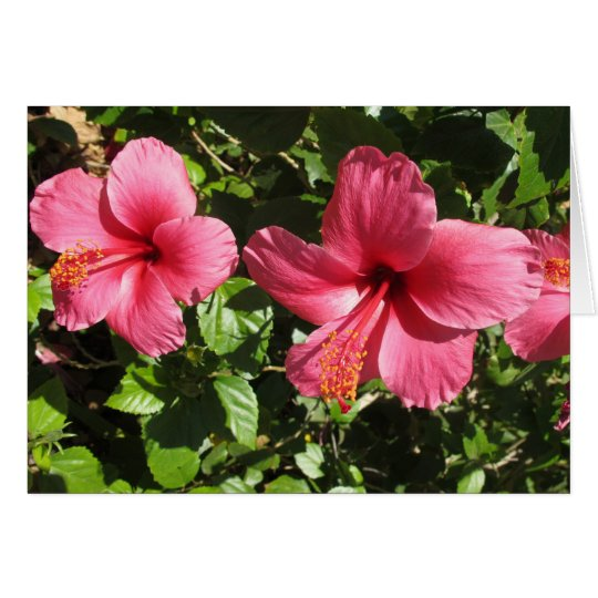 El hibisco rosado bonito florece la tarjeta de