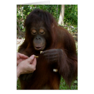 El huérfano del orangután come los cacahuetes en tarjeta