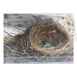 El huevo en la jerarquía, sobre del petirrojo tarjeta de felicitación