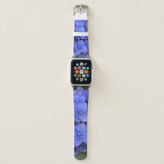 El Hydrangea azul bonito Apple mira la banda de