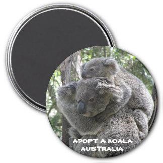 El imán adopta una koala Australia ZIZZAGO