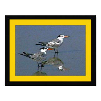 El jGibney Birds2CocoaBeach1 de la serie del artis Invitacion Personal
