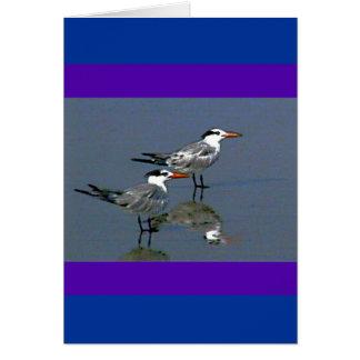 El jGibney Birds2CocoaBeach1 de la serie del artis Tarjeta De Felicitación