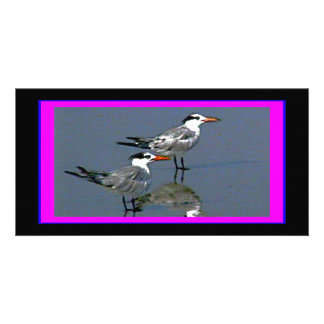 El jGibney Birds2CocoaBeach1 de la serie del artis Tarjeta Fotográfica