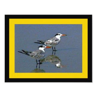 El jGibney Birds2CocoaBeach1 de la serie del Invitacion Personal