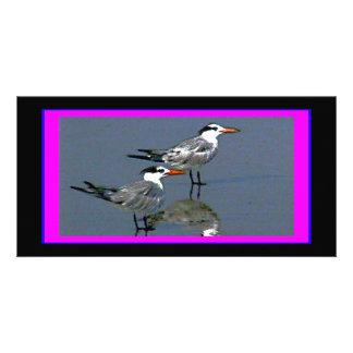 El jGibney Birds2CocoaBeach1 de la serie del Tarjeta Fotografica Personalizada