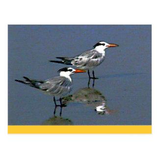El jGibney Birds2CocoaBeach1 de la serie del Postal