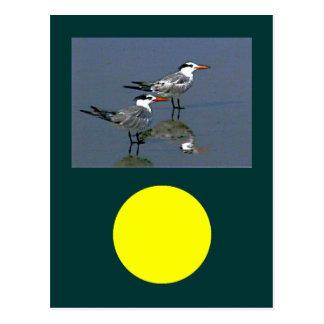 El jGibney Birds2CocoaBeach1 de la serie del Postales