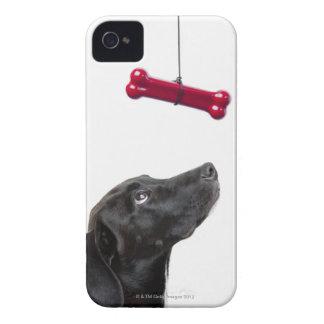 El laboratorio negro mezcló el perro con el hueso iPhone 4 carcasas