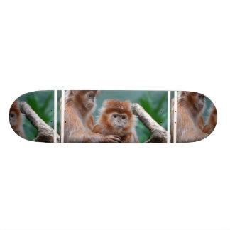 El Langur rojo Monkeys el monopatín