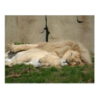 El león duerme esta noche en sus brazos postal