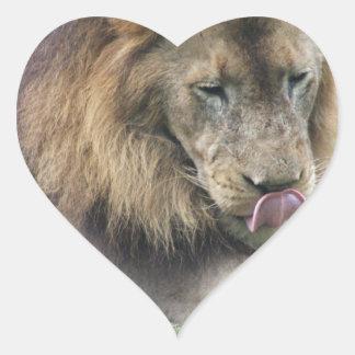¡El león que lame el suyo taja! Pegatinas De Corazon
