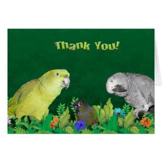 El loro de la selva le agradece las tarjetas de