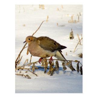 El luto se zambulló en foto de la nieve postal