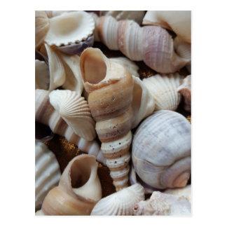 El mar exótico tropical romántico descasca amor de postal