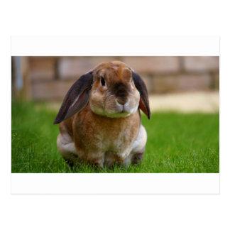 El minni del conejo lop postal