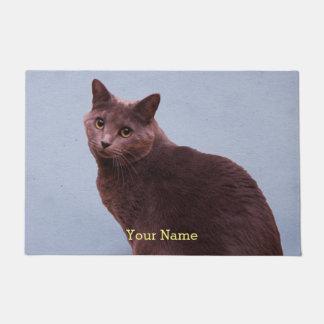 El mirar fijamente ruso del gato azul